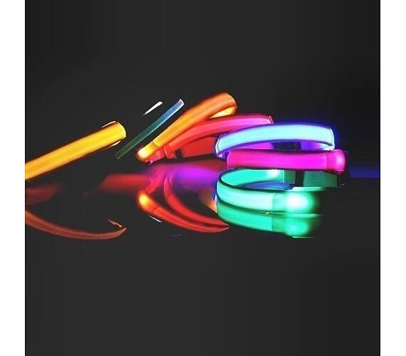 Reedog Colour svíticí obojek pro malé