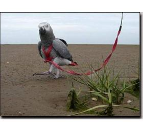 Kšandy svodítkem pro papoušky Terra vel. XS