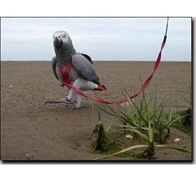 Kšandy svodítkem pro papoušky Terra vel. L