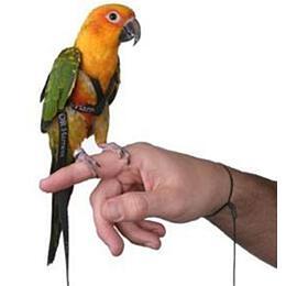 Kšandy svodítkem pro papoušky Terra vel. M